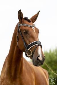 Photo cheval a vendre JARDA